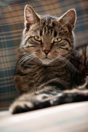 Katzenphysiotherapie nach Hängen im Kippfenster