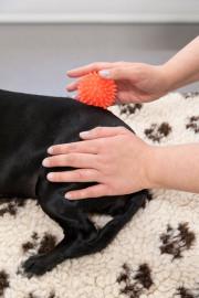 Hund Physiotherapie nach Autounfall