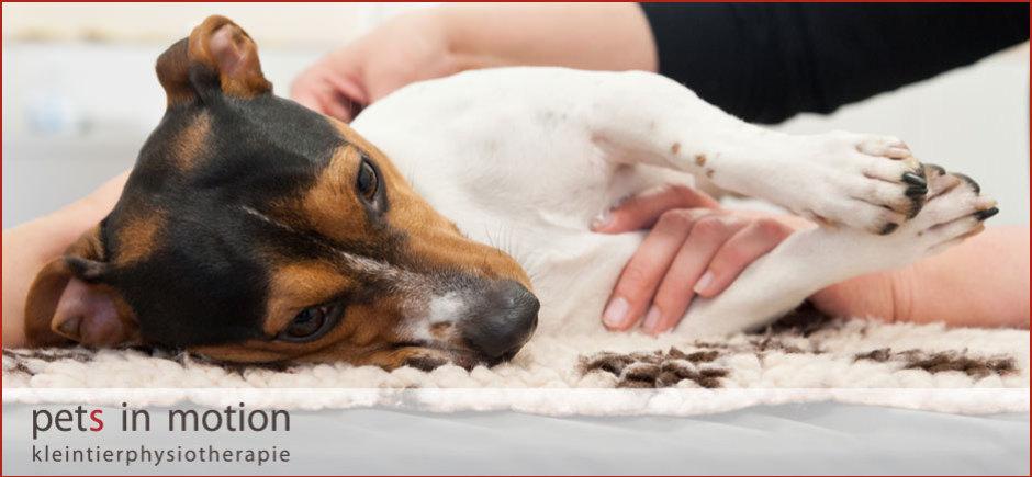 Kleintierphysiotherapie, Tierphysiotherapie, Physiotherapie für Hunde