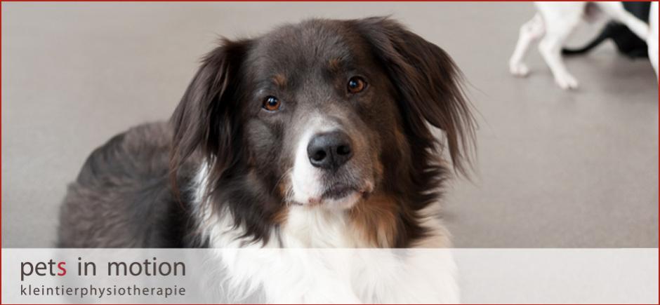 Physiotherapie für Hunde bei HD