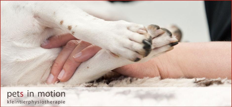 Hundephysiotherapie, Physiotherapie für Hunde , Tierphysiotherapie für Katzen